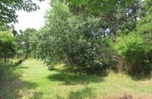 141 Hummock Pond Road Thumbnail